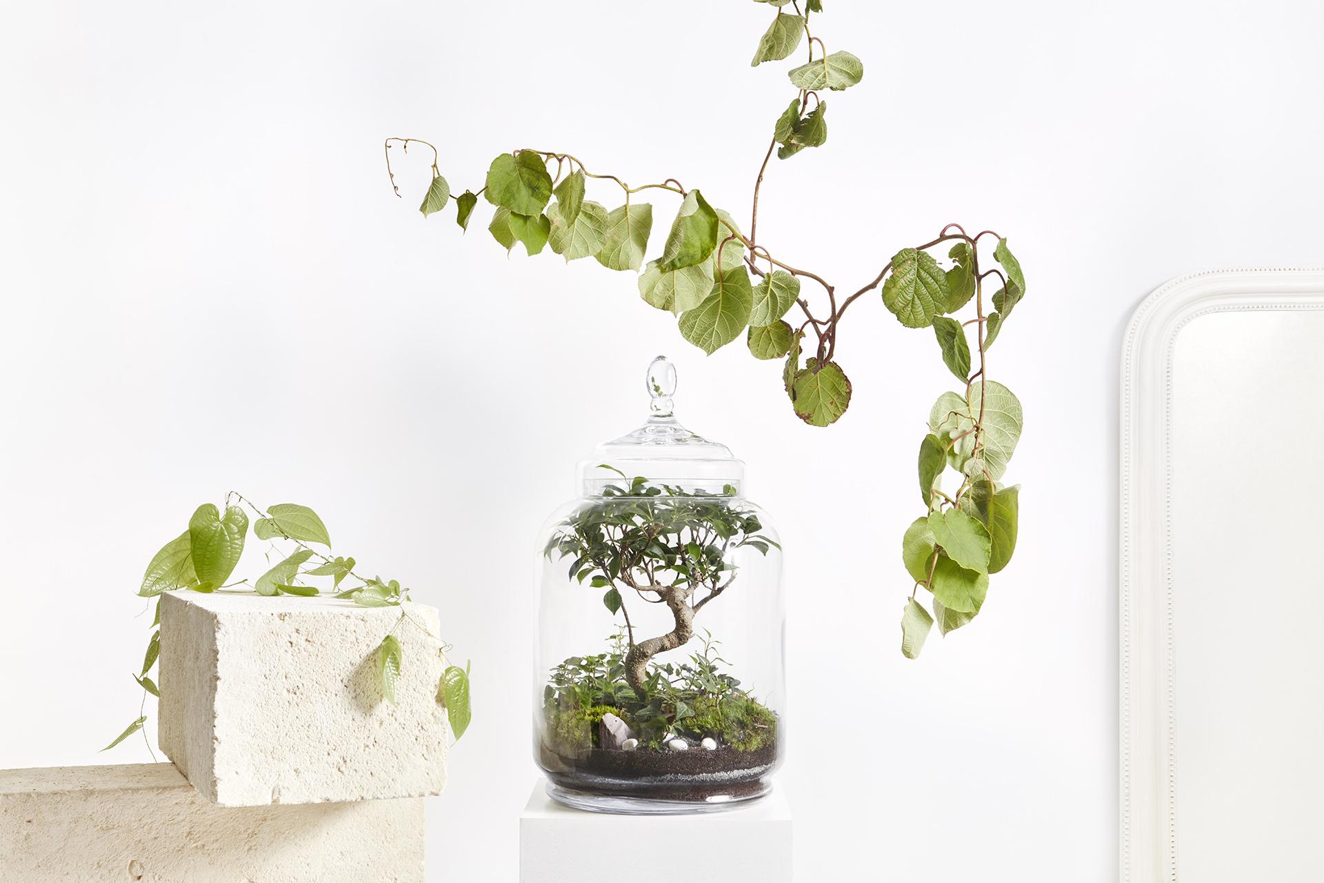 Un arbre d'intérieur