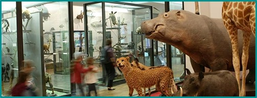 musée animaux