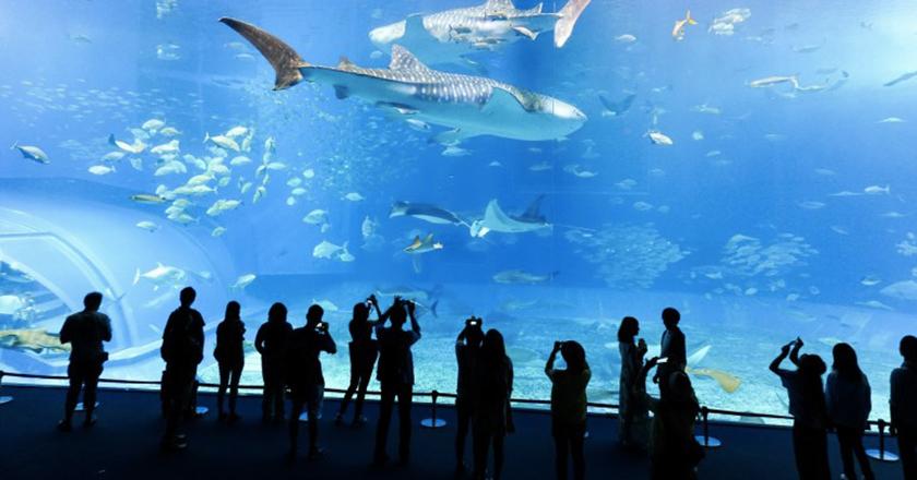Visite aquarium Lyon enfants
