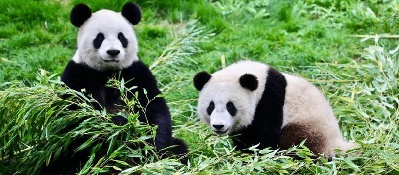 Visuel article animaux de Pairi Daiza