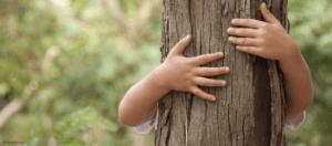Un arbre pour chacun de mes Petits-Enfants