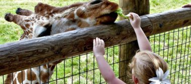 Le zoo préféré de vos Petits-Enfants
