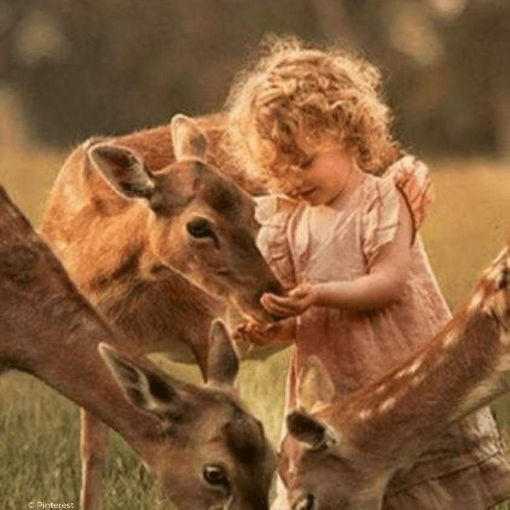 Ecouter le brame du cerf en famille