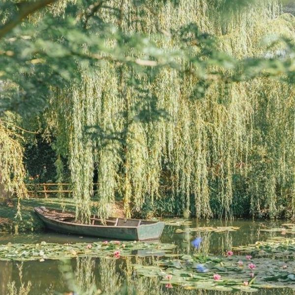 Le top 5 des jardins de France à découvrir avec ses Petits-Enfants
