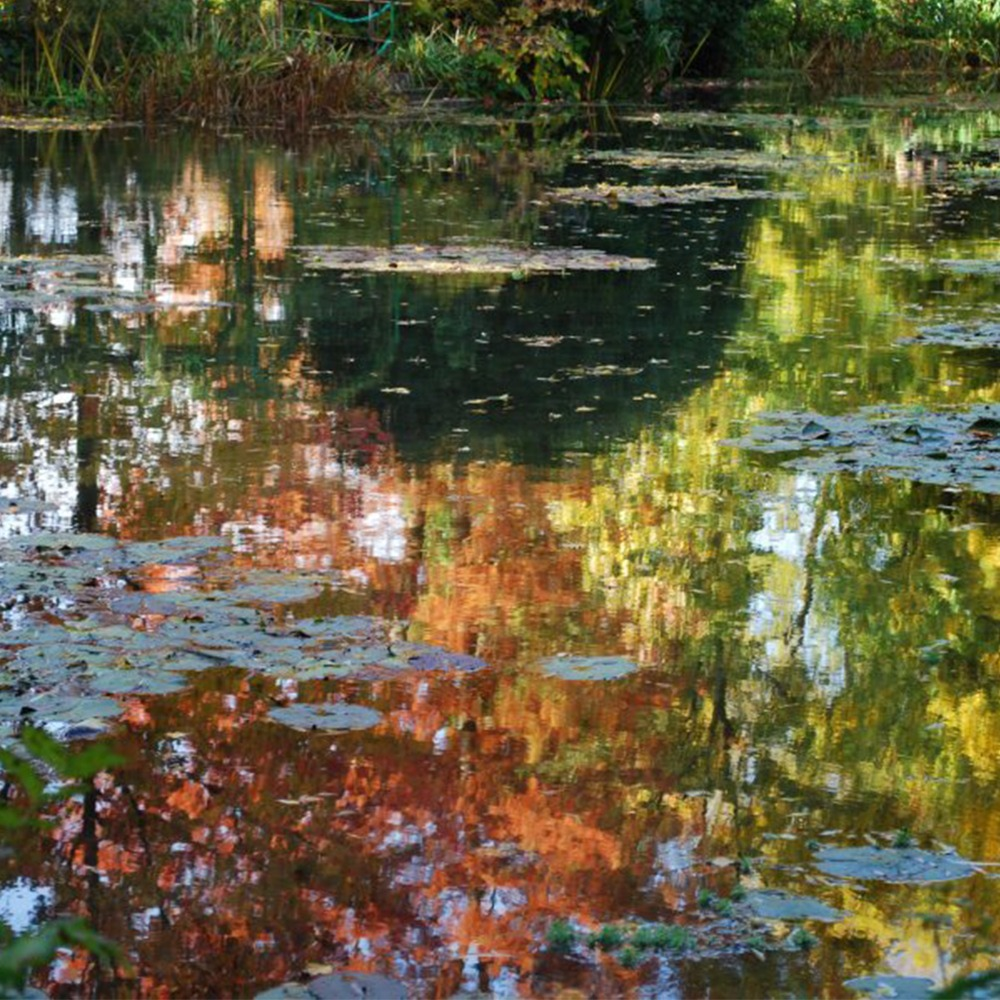 Le top des 5 jardins de France à visiter en famille pour fêter l'automne