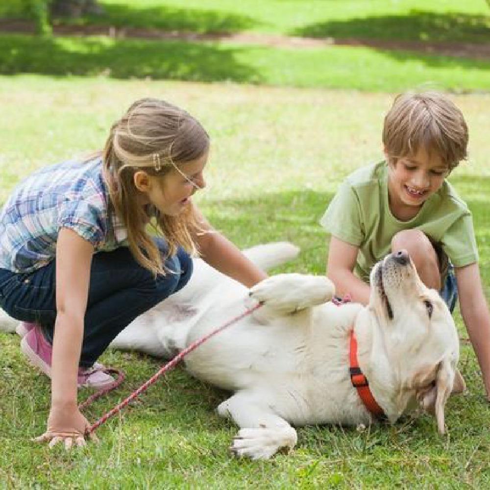 Des chiens d'assistance pour éveiller des Petits-Enfants aveugles !