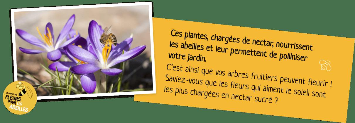 composition fleur et texte